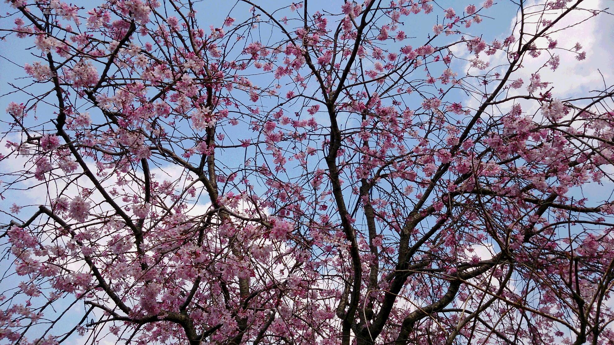 春がきた♡