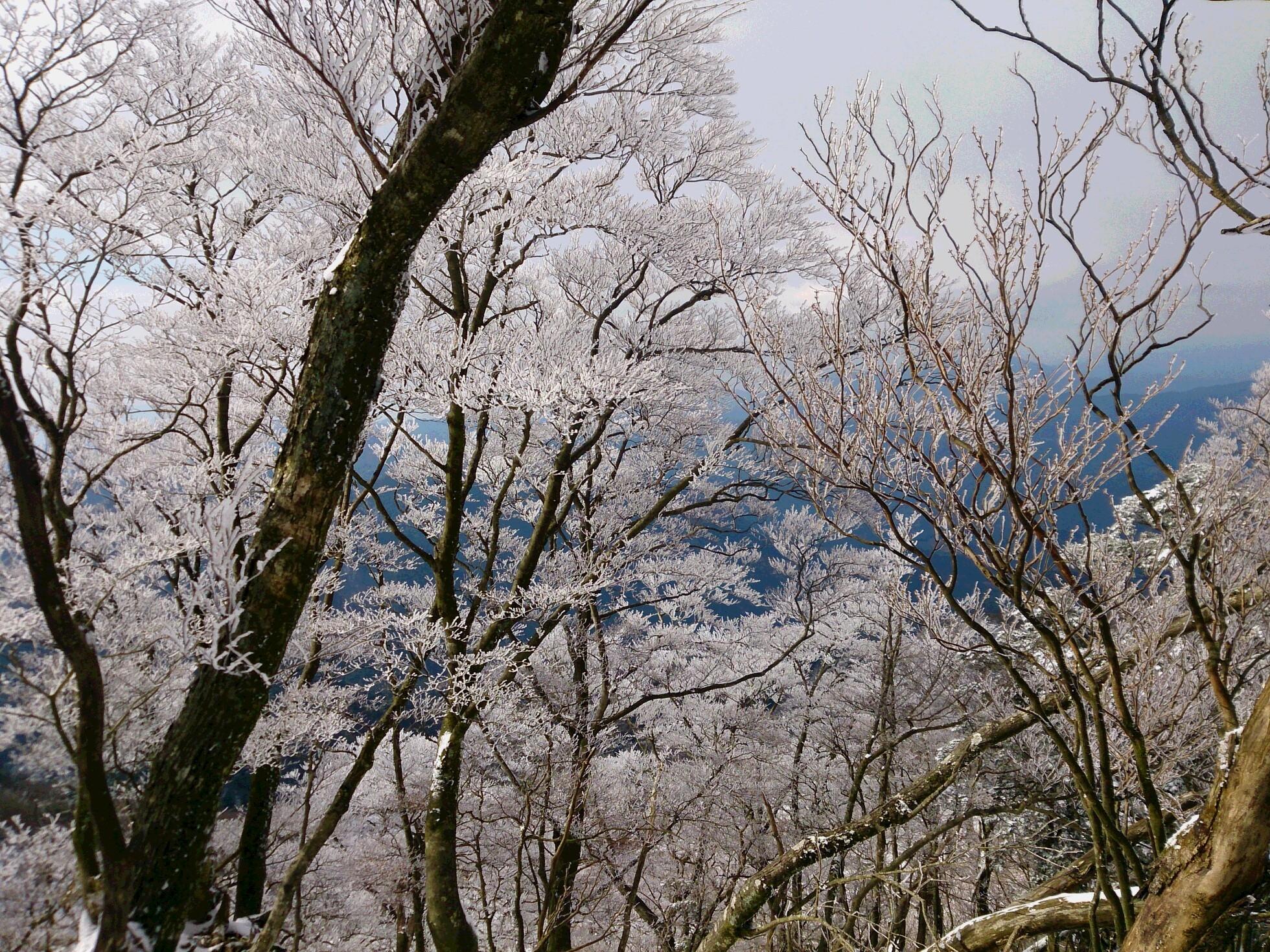 英彦山霧氷2
